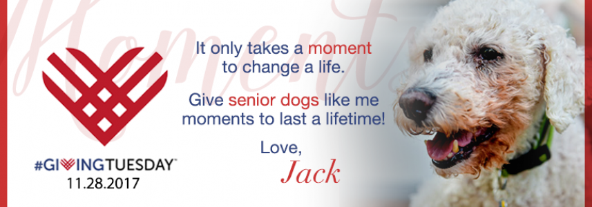 It only takes a moment to change a life. Give senior dogs like me moments to last a lifetime! love, jack. On left, picture of red heart with #givingtuesday 11.28.2017. On Right, picture of white poodle dog with green collar.