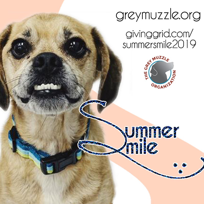 Puggle Dozer for the Summer Smile Campaign