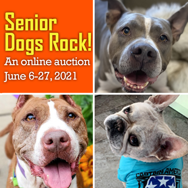 Auction graphic with three senior dogs