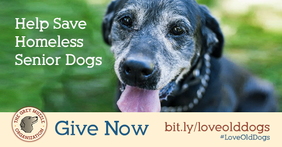 """A shareable image that reads \""""Help save homeless senior dogs - Give now - bit.ly/loveolddogs - #LoveOldDogs"""